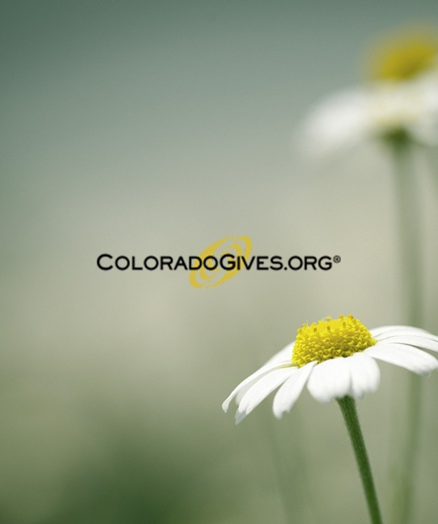 Colorado Gives daisy background